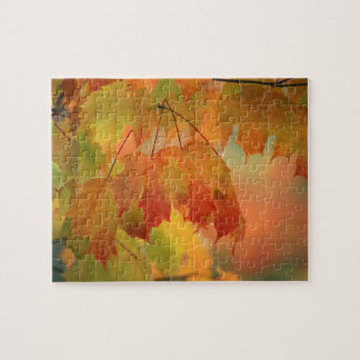 USA, Northeast, Maple Leaves in Rain. Credit as: Puzzle