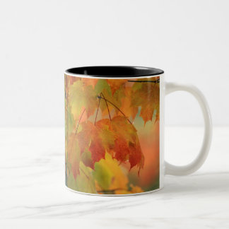 USA, Northeast, Maple Leaves in Rain. Credit as: Two-Tone Coffee Mug