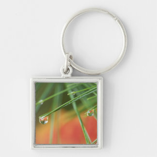 USA, Northeast, Pine tree needles with drops of Silver-Colored Square Key Ring