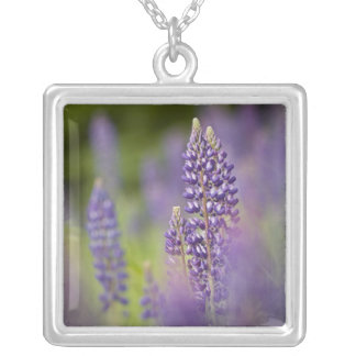 USA, Northeastern Minnesota, near Silver Bay, Silver Plated Necklace