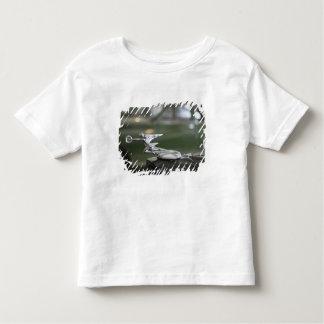 USA, Ohio, Dayton: America's Packard Museum Tee Shirts