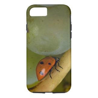 USA, Oregon, Amity. Lady bug on Chardonnay iPhone 7 Case