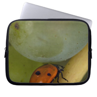 USA, Oregon, Amity. Lady bug on Chardonnay Laptop Sleeves