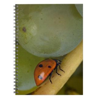 USA, Oregon, Amity. Lady bug on Chardonnay Notebooks