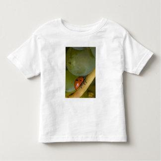 USA, Oregon, Amity. Lady bug on Chardonnay T Shirt
