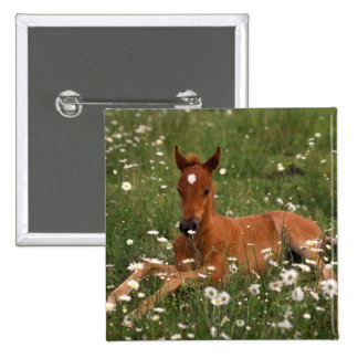 USA, Oregon, Arabian Pony. 15 Cm Square Badge