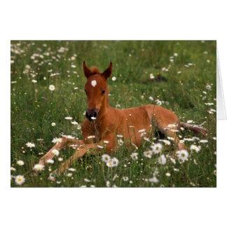 USA, Oregon, Arabian Pony. Card
