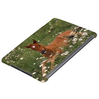 USA, Oregon, Arabian Pony. Cover For iPad Air