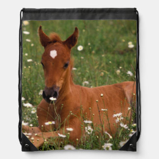 USA, Oregon, Arabian Pony. Drawstring Bag