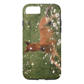 USA, Oregon, Arabian Pony. iPhone 8/7 Case