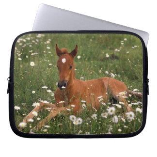 USA, Oregon, Arabian Pony. Laptop Sleeve