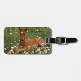 USA, Oregon, Arabian Pony. Luggage Tag