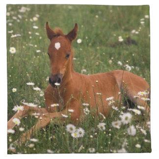 USA, Oregon, Arabian Pony. Napkin