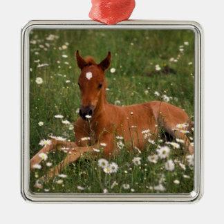 USA, Oregon, Arabian Pony. Silver-Colored Square Decoration