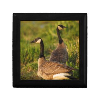 USA, Oregon, Baskett Slough National Wildlife 3 Gift Box