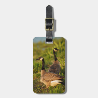 USA, Oregon, Baskett Slough National Wildlife 3 Luggage Tag