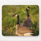 USA, Oregon, Baskett Slough National Wildlife 3 Mouse Mat