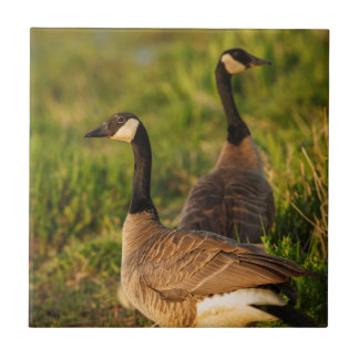 USA, Oregon, Baskett Slough National Wildlife 3 Tile