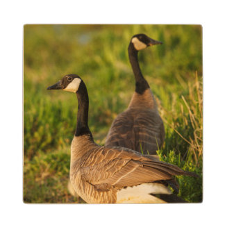 USA, Oregon, Baskett Slough National Wildlife 3 Wood Coaster