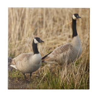 USA, Oregon, Baskett Slough National Wildlife 5 Tile