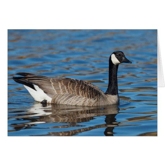 USA, Oregon, Baskett Slough National Wildlife 7 Card