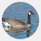 USA, Oregon, Baskett Slough National Wildlife 7 Classic Round Sticker