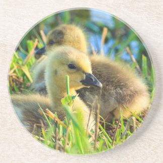USA, Oregon, Baskett Slough National Wildlife 9 Coaster