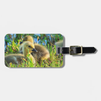 USA, Oregon, Baskett Slough National Wildlife 9 Luggage Tag