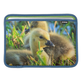 USA, Oregon, Baskett Slough National Wildlife 9 MacBook Sleeve