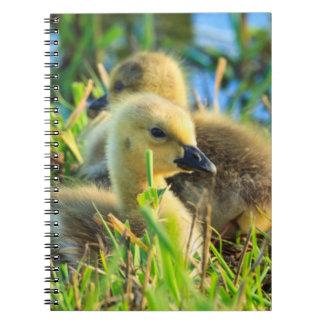 USA, Oregon, Baskett Slough National Wildlife 9 Notebook
