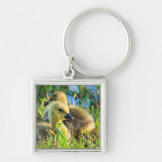 USA, Oregon, Baskett Slough National Wildlife 9 Silver-Colored Square Key Ring