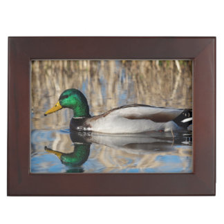 USA, Oregon, Baskett Slough National Wildlife Keepsake Box