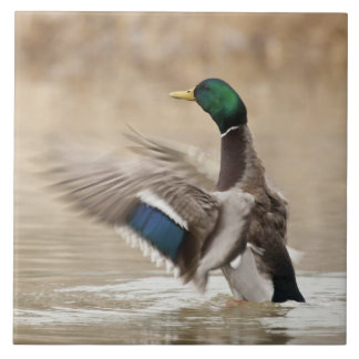 USA, Oregon, Baskett Slough National Wildlife Tile
