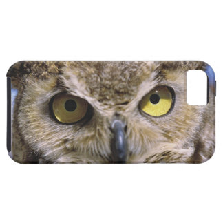 USA, Oregon, Bend. Great Horned Owls are common iPhone 5 Covers