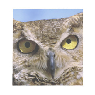 USA, Oregon, Bend. Great Horned Owls are common Notepad