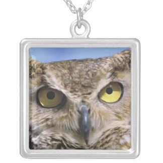 USA, Oregon, Bend. Great Horned Owls are common Silver Plated Necklace
