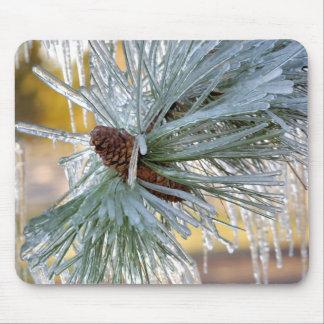 USA, Oregon, Bend. Ponderosa pine needles are Mouse Mat