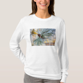 USA, Oregon, Bend. Ponderosa pine needles are T-Shirt