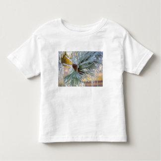 USA, Oregon, Bend. Ponderosa pine needles are Toddler T-Shirt