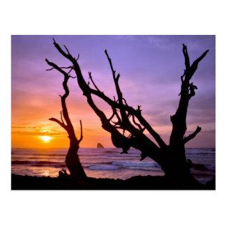USA, Oregon, Cape Meares. Sunset Postcard