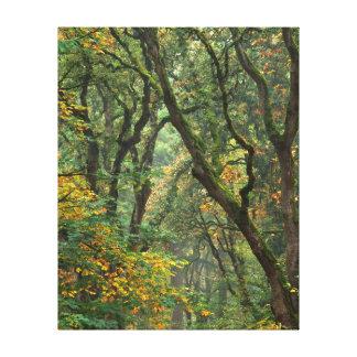 USA, Oregon, Champoeg State Park. Autumn Canvas Print