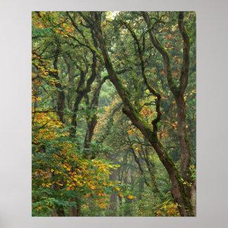 USA, Oregon, Champoeg State Park. Autumn Poster