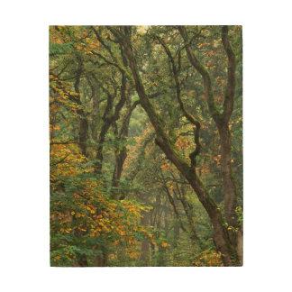 USA, Oregon, Champoeg State Park. Autumn Wood Print