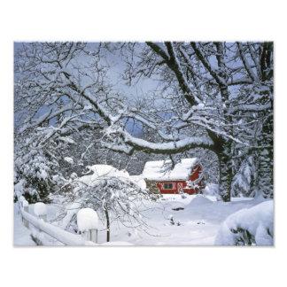 USA, Oregon, Clackamas County. Fresh snow Photograph