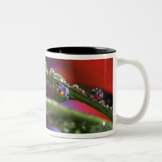 USA, Oregon, Close-up abstract of purple Two-Tone Coffee Mug