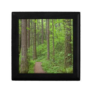 USA, Oregon, Columbia River Gorge. Elowah Falls Gift Box