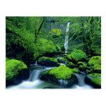 USA, Oregon, Columbia River Gorge National 2 Post Card