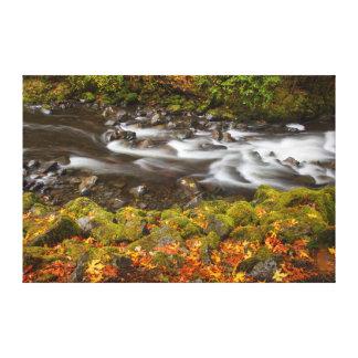 USA, Oregon, Columbia River Gorge, Tanner Creek 2 Canvas Print