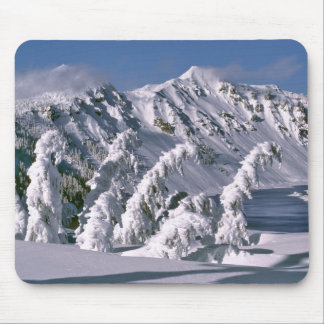 USA, Oregon, Crater Lake NP. Trees bow under the Mouse Mat