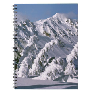 USA, Oregon, Crater Lake NP. Trees bow under the Notebook